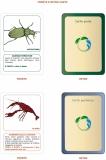alcune-carte-del-gioco-vincitore